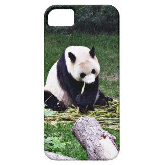 Panda, der Bambus isst Hülle Fürs iPhone 5