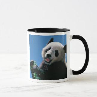 Panda, der Bambus, Wolong, Sichuan, China isst Tasse