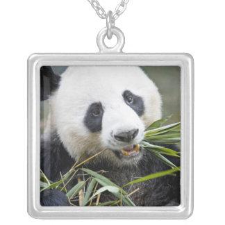 Panda, der Bambusschosse Alluropoda 2 isst Versilberte Kette