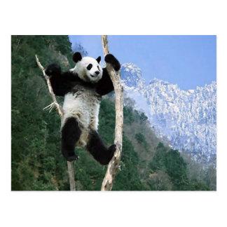 Panda fest im Baum Postkarte