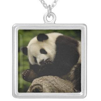 Pandababy Ailuropoda melanoleuca) 12 Versilberte Kette