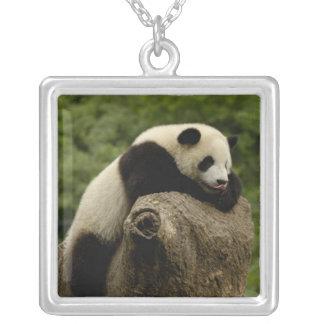 Pandababy Ailuropoda melanoleuca) 2 Versilberte Kette