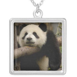 Pandababy Ailuropoda melanoleuca) Versilberte Kette