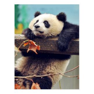 Pandababy über dem Baum Postkarten