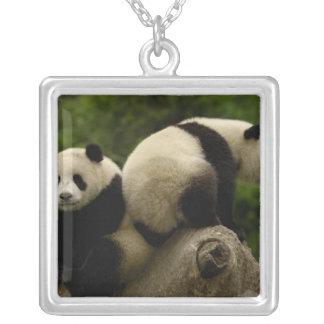 Pandababys Ailuropoda melanoleuca) 10 Versilberte Kette