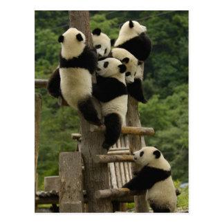 Pandababys Ailuropoda melanoleuca) Postkarte