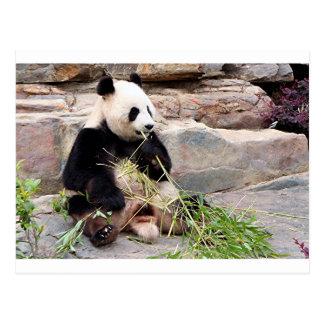 Pandabär am Zoo Postkarte