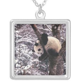 Pandajunges, das auf dem Baum bedeckt mit Schnee Versilberte Kette