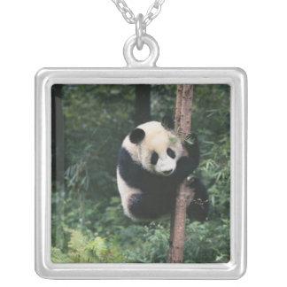 Pandajunges, das den Baum, Wolong klettert, Versilberte Kette