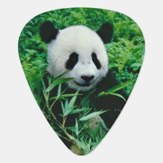Pandajunges isst Bambus im Busch, Plektrum