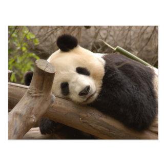 PandaSD010 Postkarte