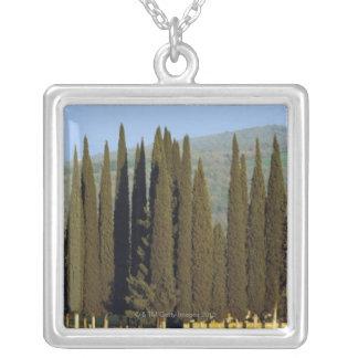 Panoramablick der Zypressenbäume nähern sich Siena Versilberte Kette