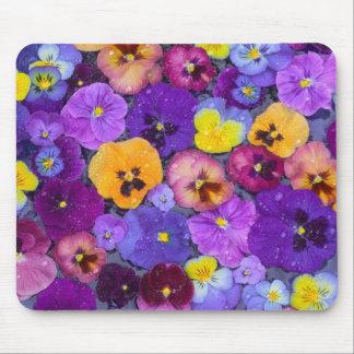 Pansy-Blumen, die in Vogelbad mit Tau schwimmen Mousepads