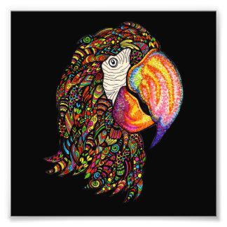 Papagei Photos