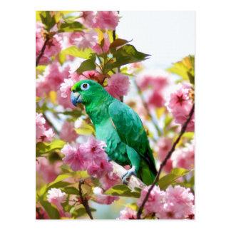 Papagei in der Kirschblüten-Postkarte Postkarte