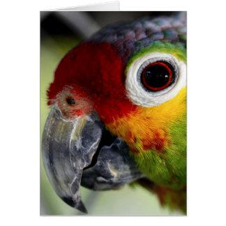 Papageien-Karte Karte