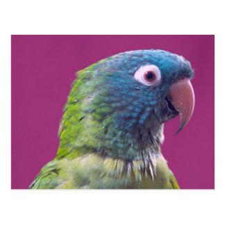 Papageien-Postkarte Postkarte