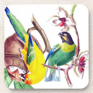 Papageien-Vogel-Tier-Tier-Dschungel-Untersetzer Getränkeuntersetzer