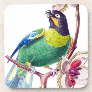 Papageien-Vogel-Tier-Tier-Dschungel-Untersetzer Untersetzer