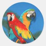 Papageien X Runder Aufkleber