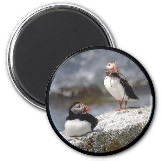 Papageientaucher-Paar-Kreis-Magnet Runder Magnet 5,7 Cm