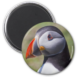 Papageientaucher-Porträt-Magnet Runder Magnet 5,7 Cm