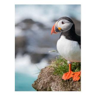 Papageientaucher Postkarte