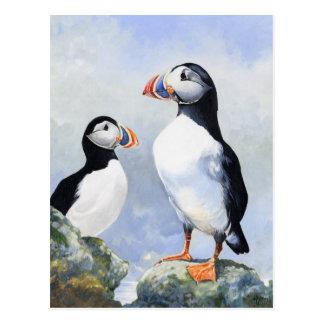 Papageientaucher-Postkarte Postkarte