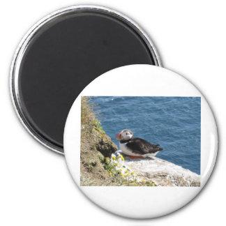 Papageientaucher Runder Magnet 5,7 Cm