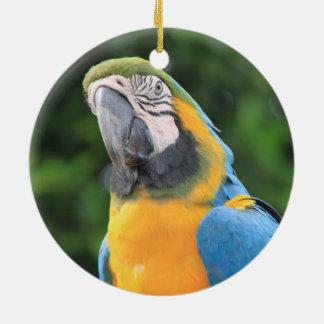 Papageienverzierung