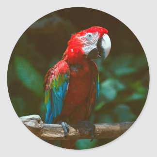 Papageienvogel Runder Aufkleber