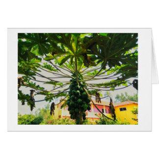 Papaya-Baum Karte