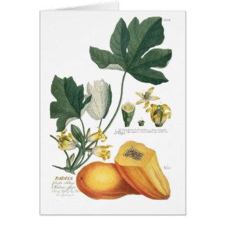Papaya Karte
