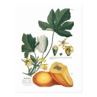 Papaya Postkarte