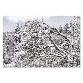 Papier Snowy BranchesTissue