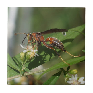 Papierwespe auf Blumen-Keramik-Foto-Fliese Keramikfliese