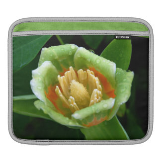Pappel-Baum-Tulpehülse iPad Sleeve