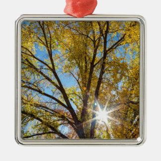 Pappel-Sonnenschein Silbernes Ornament