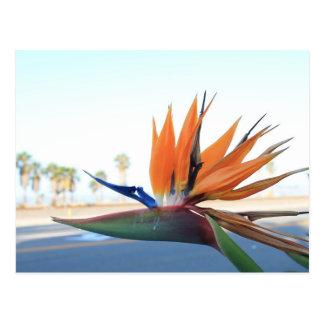 Paradiesvögel auf dem Strand Postkarte