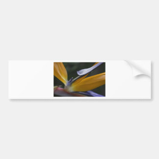 Paradiesvogel Blume Autoaufkleber