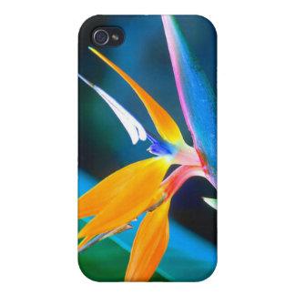 Paradiesvogel (Hawaii) Hülle Fürs iPhone 4