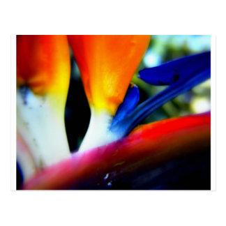 Paradiesvogel Postkarte