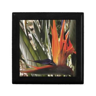 Paradiesvogel (Strelitzia) Erinnerungskiste
