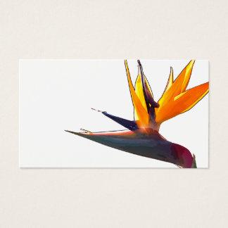 Paradiesvogel Visitenkarte