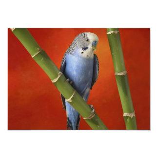 Parakeet 12,7 X 17,8 Cm Einladungskarte