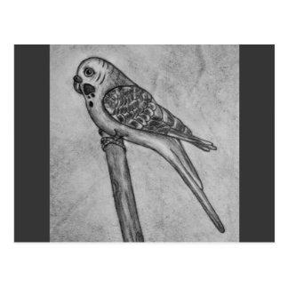 Parakeet-Bleistift, der Postkarte zeichnet