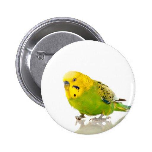 parakeet, anstecknadelbuttons
