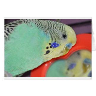 Parakeet, der im Spiegel schaut Karte