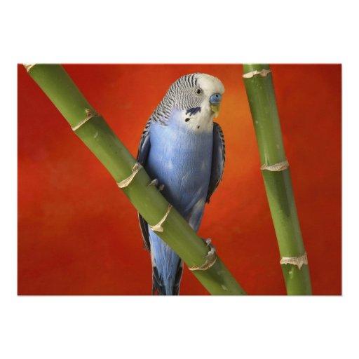 Parakeet Personalisierte Einladung