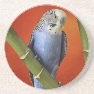 Parakeet Getränkeuntersetzer